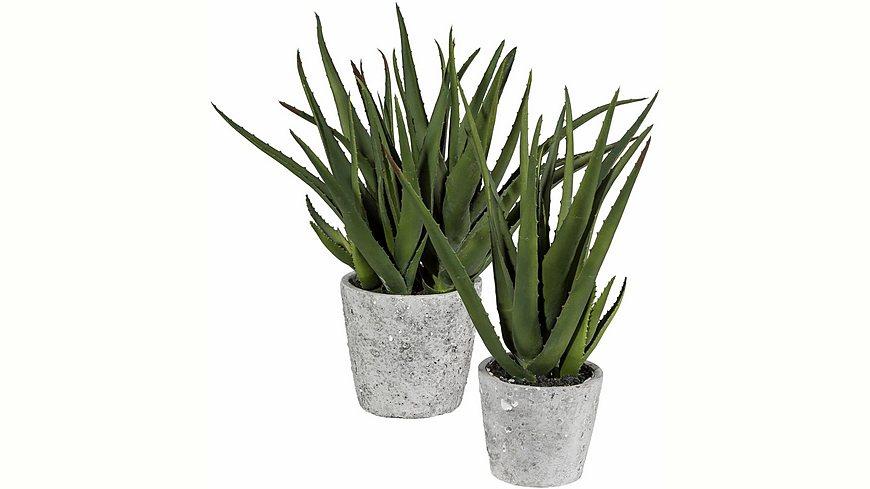 Home affaire Kunstpflanze »Aloe« im Zementtopf